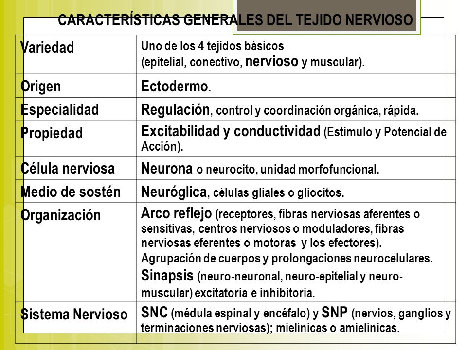 CARACTERÍSTICAS GENERALES DEL TEJIDO NERVIOSO Variedad Uno de los 4 tejidos básicos (epitelial, conectivo, nervioso y muscular). OrigenEctodermo. Espe