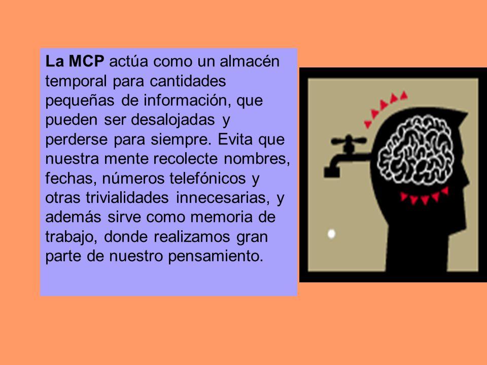 La MCP actúa como un almacén temporal para cantidades pequeñas de información, que pueden ser desalojadas y perderse para siempre. Evita que nuestra m