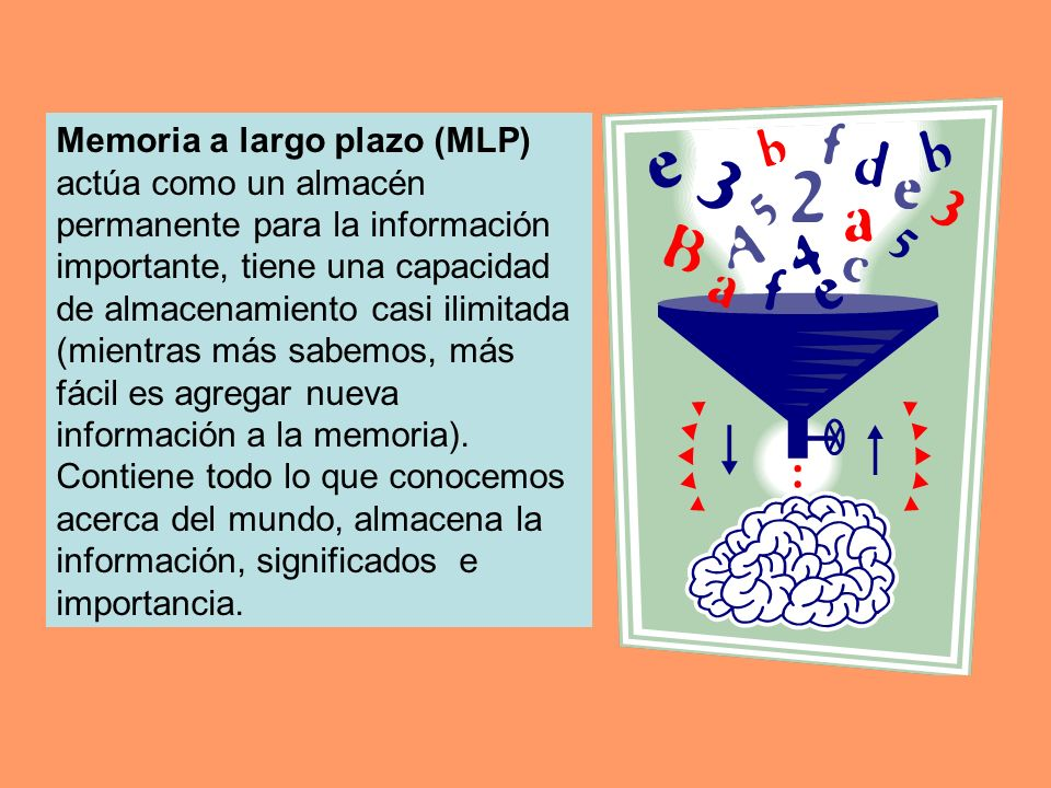 Memoria a largo plazo (MLP) actúa como un almacén permanente para la información importante, tiene una capacidad de almacenamiento casi ilimitada (mie