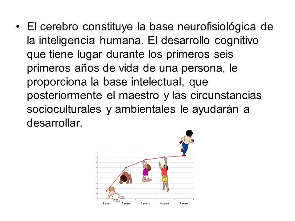 El cerebro constituye la base neurofisiológica de la inteligencia humana. El desarrollo cognitivo que tiene lugar durante los primeros seis primeros a
