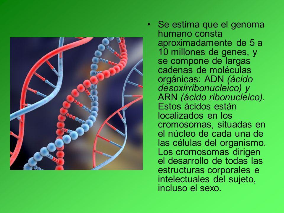 Se estima que el genoma humano consta aproximadamente de 5 a 10 millones de genes, y se compone de largas cadenas de moléculas orgánicas: ADN (ácido d