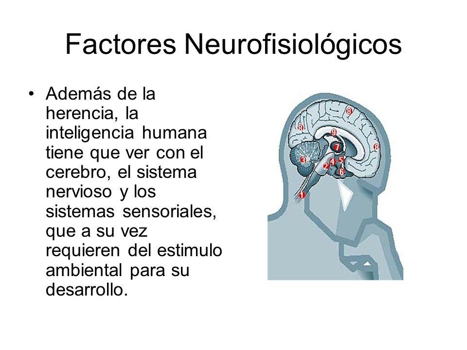 Factores Neurofisiológicos Además de la herencia, la inteligencia humana tiene que ver con el cerebro, el sistema nervioso y los sistemas sensoriales,
