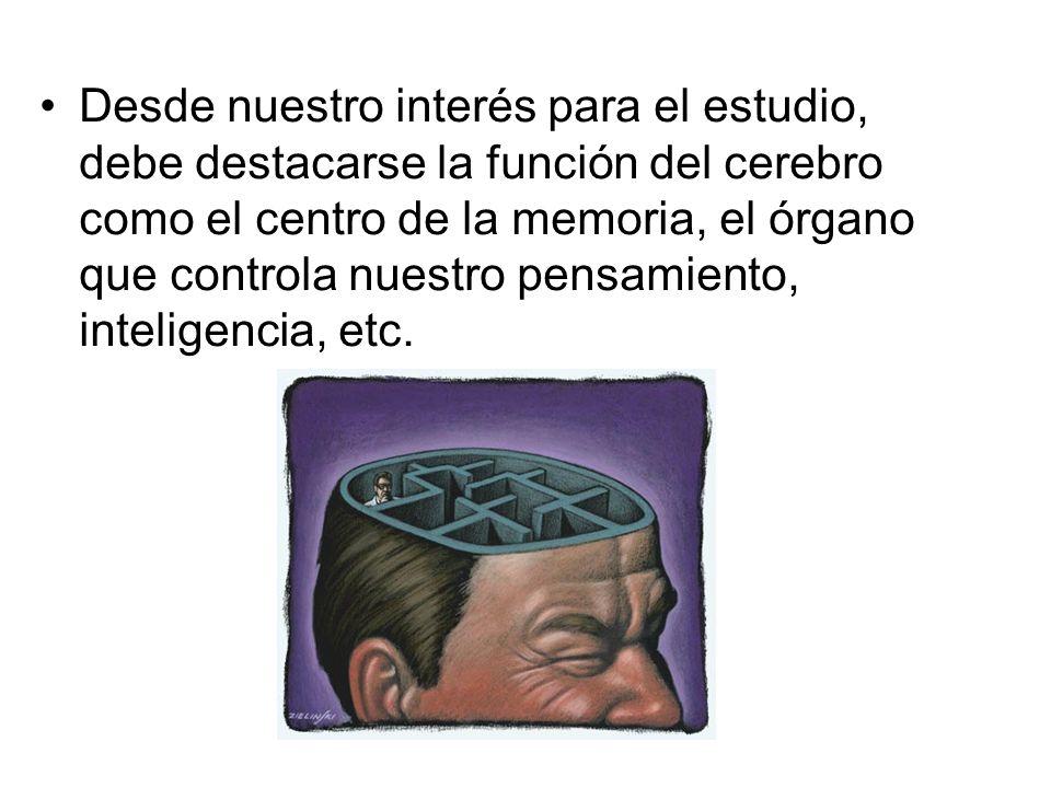 Desde nuestro interés para el estudio, debe destacarse la función del cerebro como el centro de la memoria, el órgano que controla nuestro pensamiento