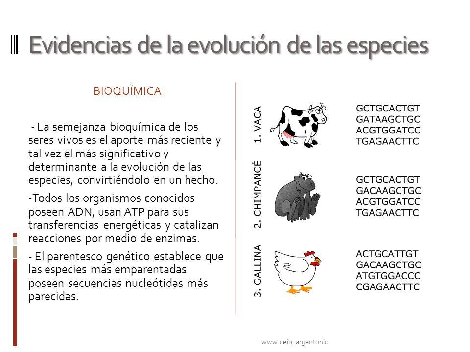 Evidencias de la evolución de las especies BIOQUÍMICA - La semejanza bioquímica de los seres vivos es el aporte más reciente y tal vez el más signific