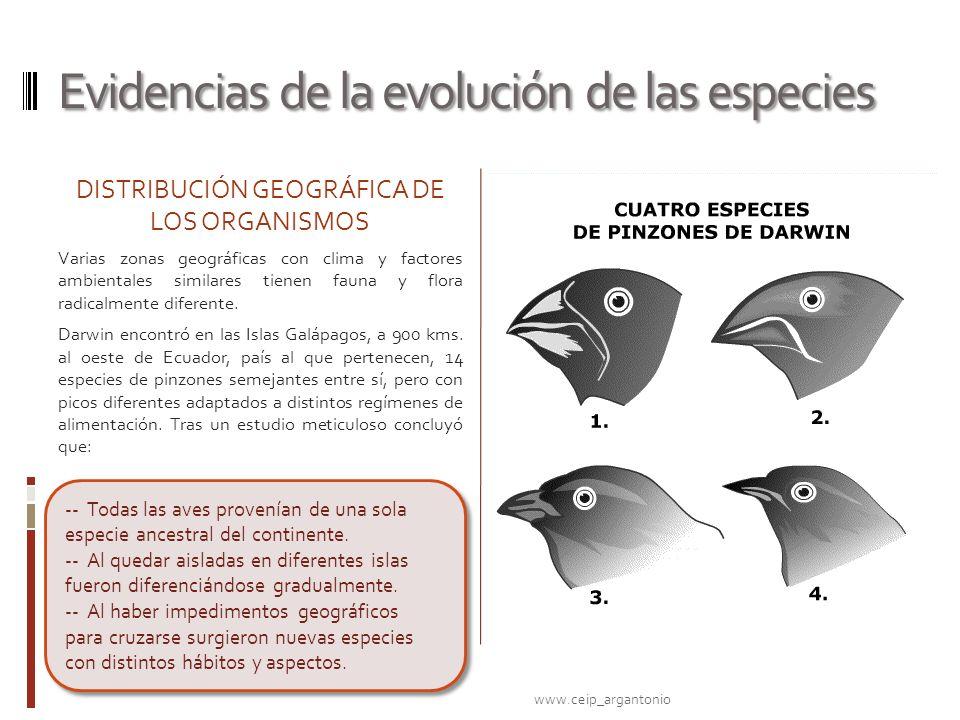 Evidencias de la evolución de las especies DISTRIBUCIÓN GEOGRÁFICA DE LOS ORGANISMOS Varias zonas geográficas con clima y factores ambientales similar