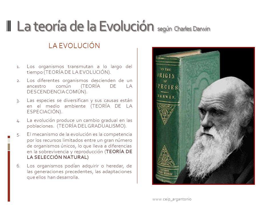 La teoría de la Evolución según Charles Darwin LA EVOLUCIÓN 1. Los organismos transmutan a lo largo del tiempo (TEORÍA DE LA EVOLUCIÓN). 2. Los difere