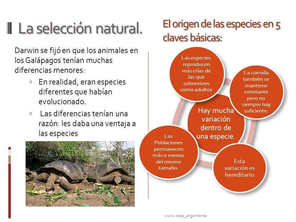La selección natural. Darwin se fijó en que los animales en los Galápagos tenían muchas diferencias menores: En realidad, eran especies diferentes que