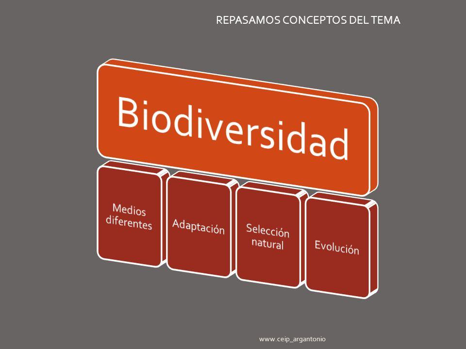 www.ceip_argantonio REPASAMOS CONCEPTOS DEL TEMA
