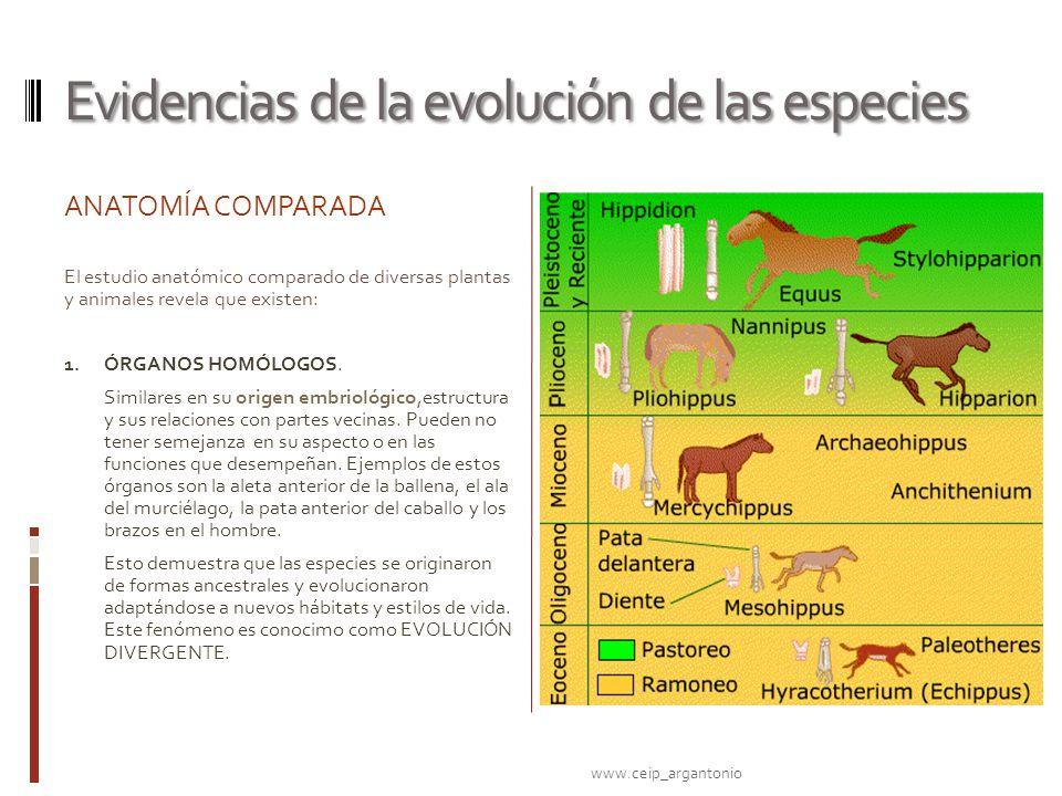 Evidencias de la evolución de las especies ANATOMÍA COMPARADA El estudio anatómico comparado de diversas plantas y animales revela que existen: 1. ÓRG