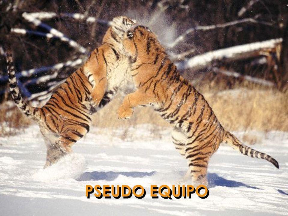 PSEUDO EQUIPO
