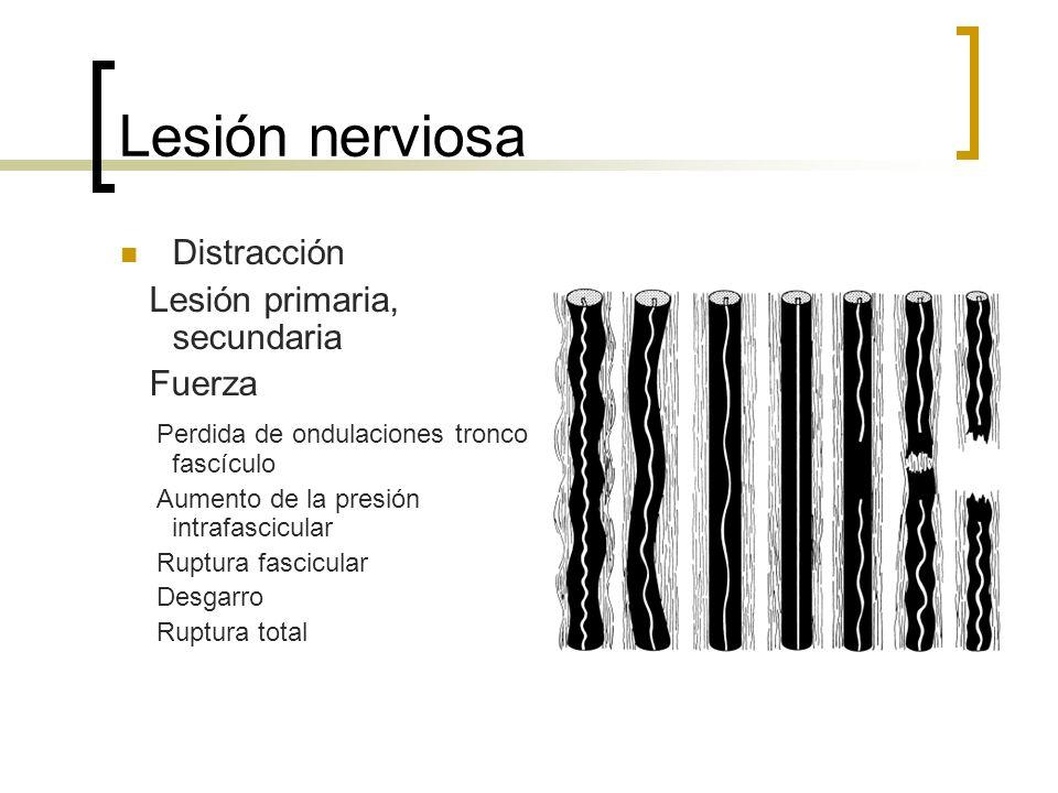 Lesión nerviosa Distracción Lesión primaria, secundaria Fuerza Perdida de ondulaciones tronco fascículo Aumento de la presión intrafascicular Ruptura