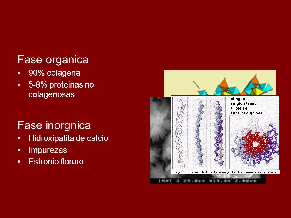 Fase organica 90% colagena 5-8% proteinas no colagenosas Fase inorgnica Hidroxipatita de calcio Impurezas Estronio floruro