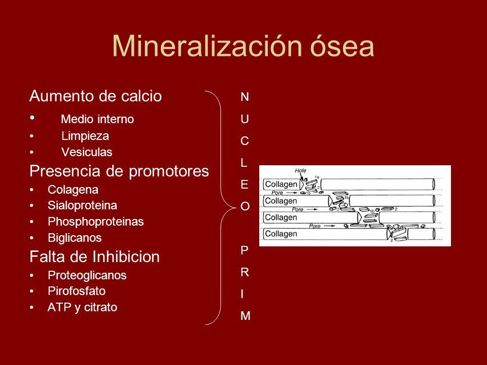 Mineralización ósea Aumento de calcio Medio interno Limpieza Vesiculas Presencia de promotores Colagena Sialoproteina Phosphoproteinas Biglicanos Falt