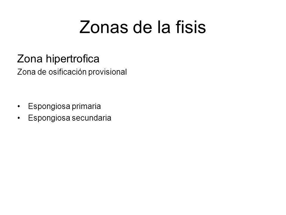 Zonas de la fisis Zona hipertrofica Zona de osificación provisional Espongiosa primaria Espongiosa secundaria