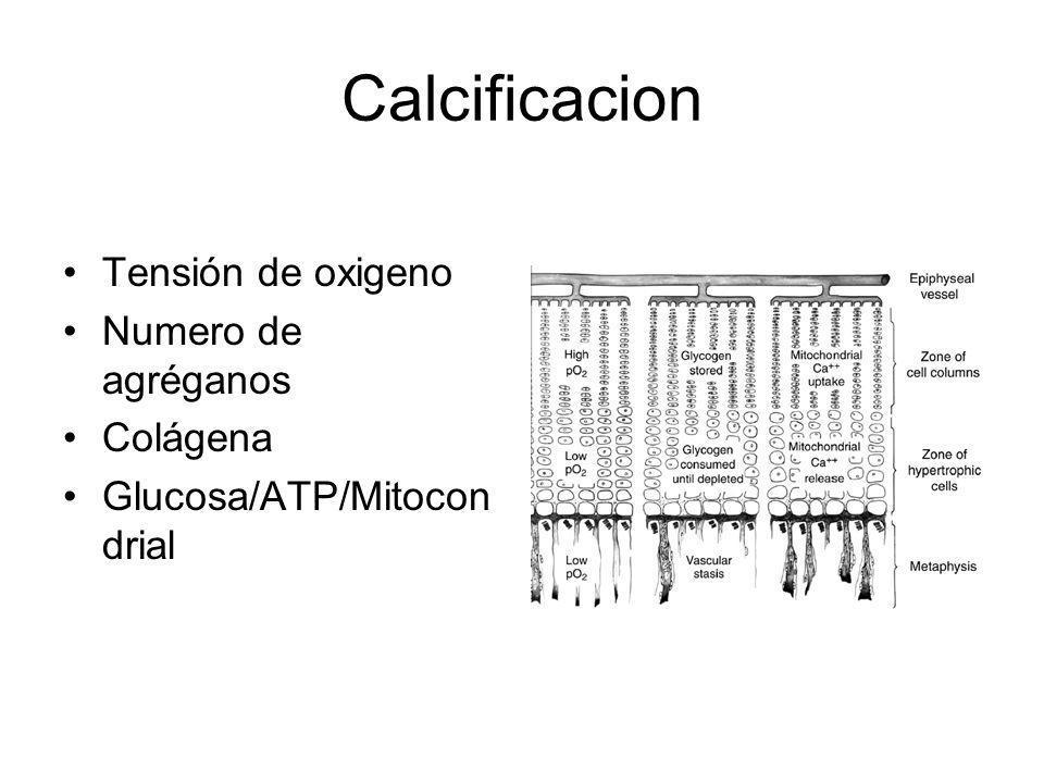 Calcificacion Tensión de oxigeno Numero de agréganos Colágena Glucosa/ATP/Mitocon drial