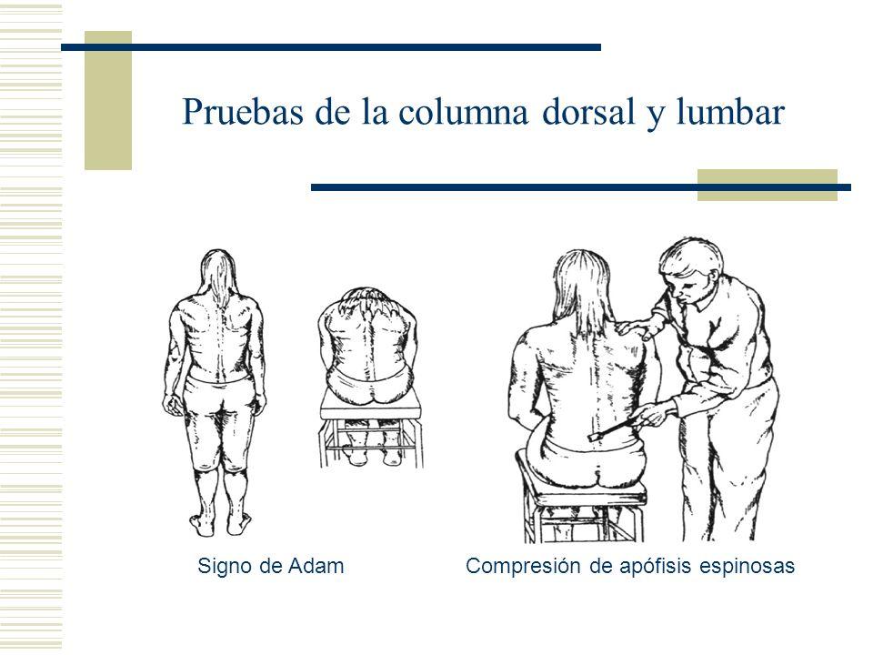 Pruebas de la columna dorsal y lumbar Signo de AdamCompresión de apófisis espinosas