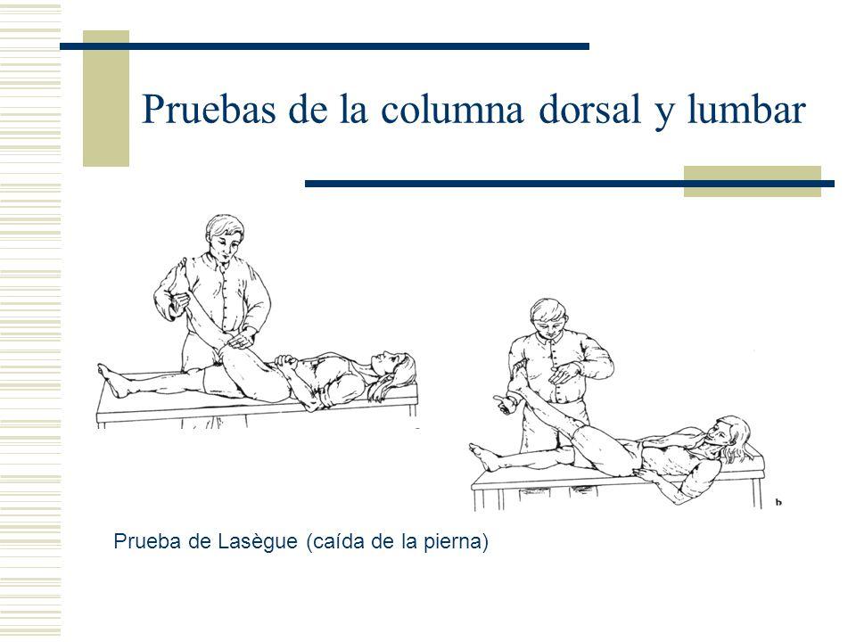 Pruebas de la columna dorsal y lumbar Prueba de Lasègue (caída de la pierna)