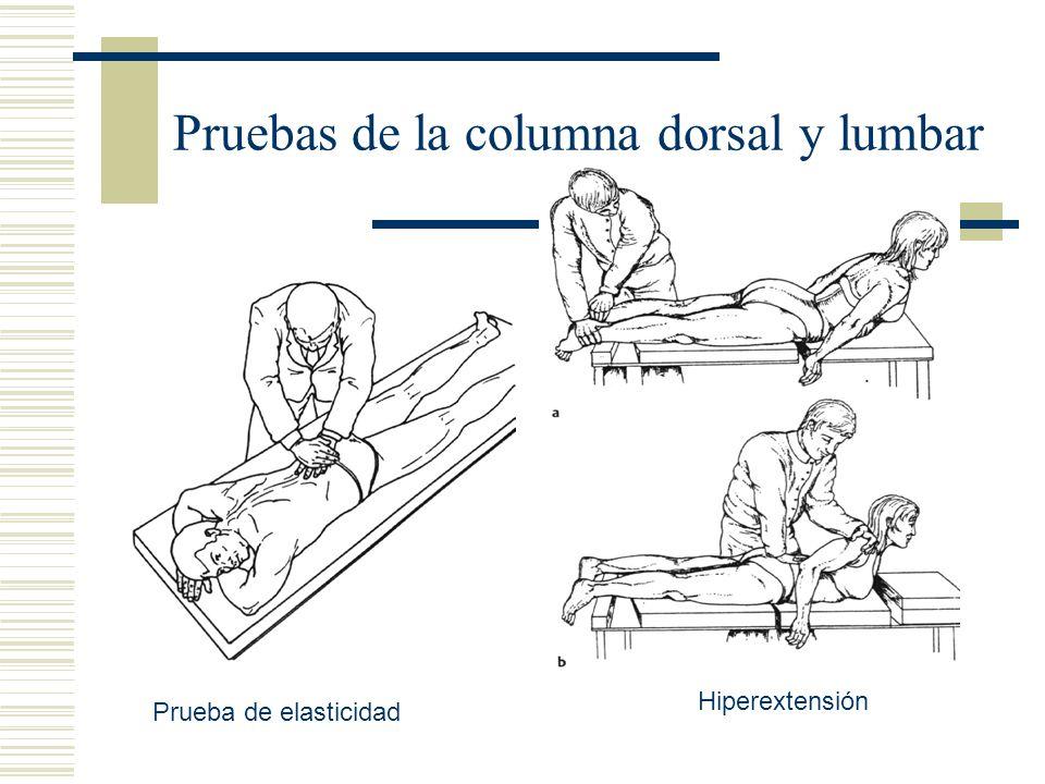 Pruebas de la columna dorsal y lumbar Prueba de elasticidad Hiperextensión