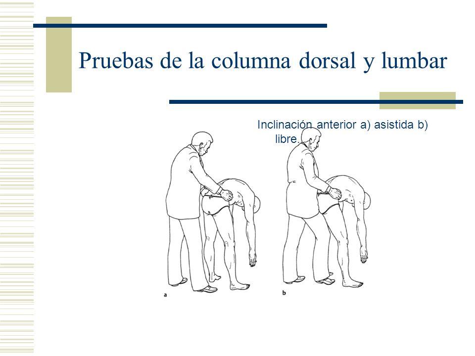 Pruebas de la columna dorsal y lumbar Inclinación anterior a) asistida b) libre.