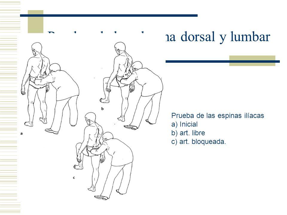 Pruebas de la columna dorsal y lumbar Prueba de las espinas ilíacas a) Inicial b) art. libre c) art. bloqueada.