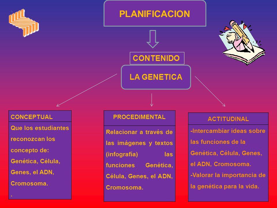 PLANIFICACION LA GENETICA CONTENIDO CONCEPTUAL Que los estudiantes reconozcan los concepto de: Genética, Célula, Genes, el ADN, Cromosoma.. PROCEDIMEN