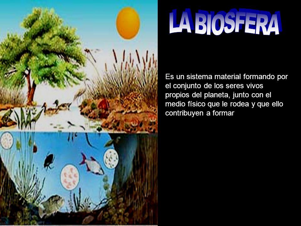 Es un sistema material formando por el conjunto de los seres vivos propios del planeta, junto con el medio físico que le rodea y que ello contribuyen a formar
