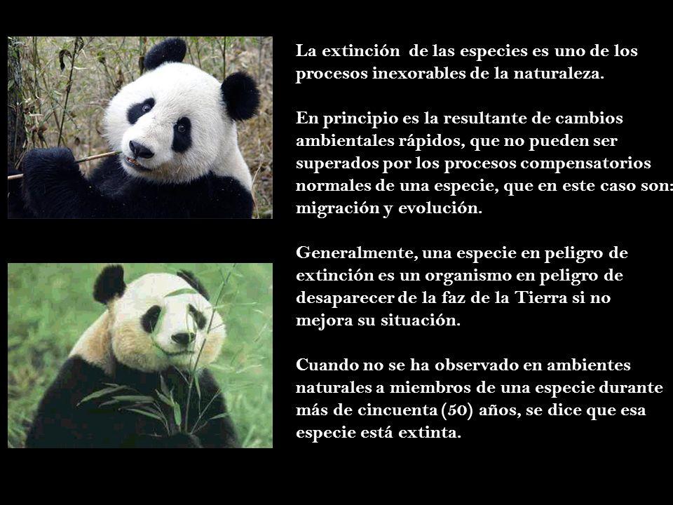 La extinción de las especies es uno de los procesos inexorables de la naturaleza. En principio es la resultante de cambios ambientales rápidos, que no