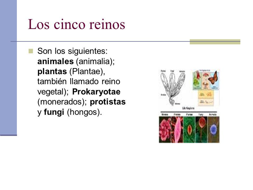 Los cinco reinos Son los siguientes: animales (animalia); plantas (Plantae), también llamado reino vegetal); Prokaryotae (monerados); protistas y fung