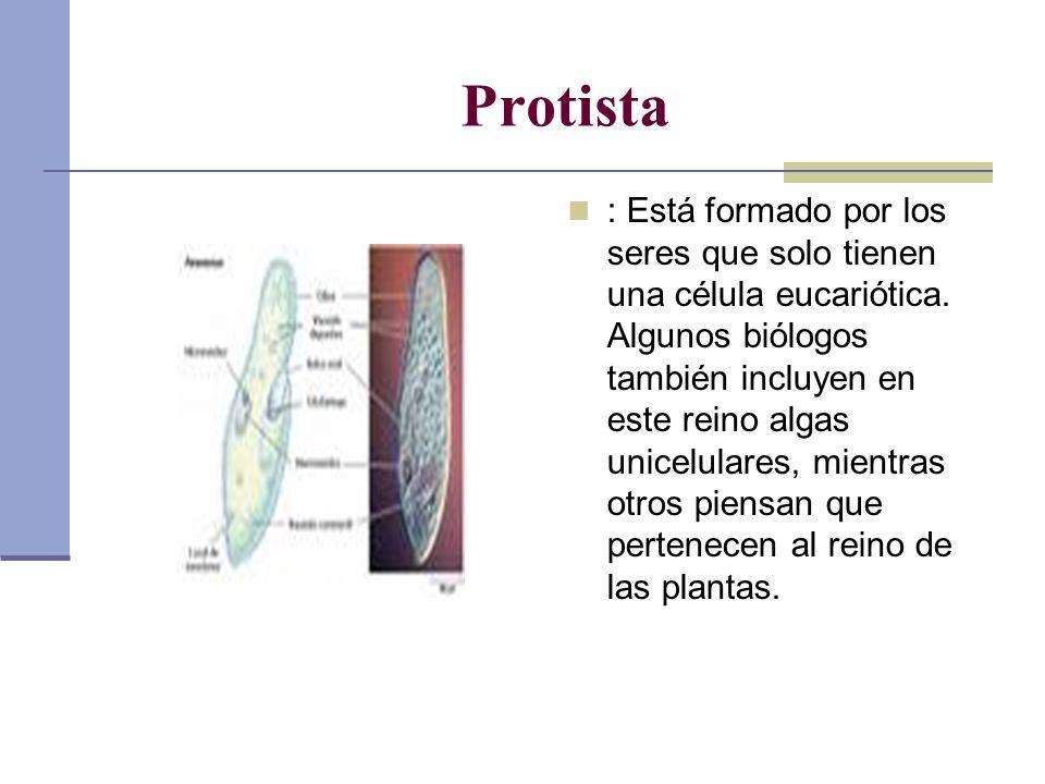 Protista : Está formado por los seres que solo tienen una célula eucariótica. Algunos biólogos también incluyen en este reino algas unicelulares, mien