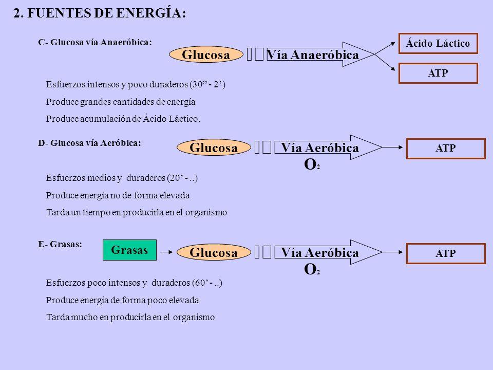 2. FUENTES DE ENERGÍA: C- Glucosa vía Anaeróbica: Esfuerzos intensos y poco duraderos (30 - 2) Produce grandes cantidades de energía Produce acumulaci