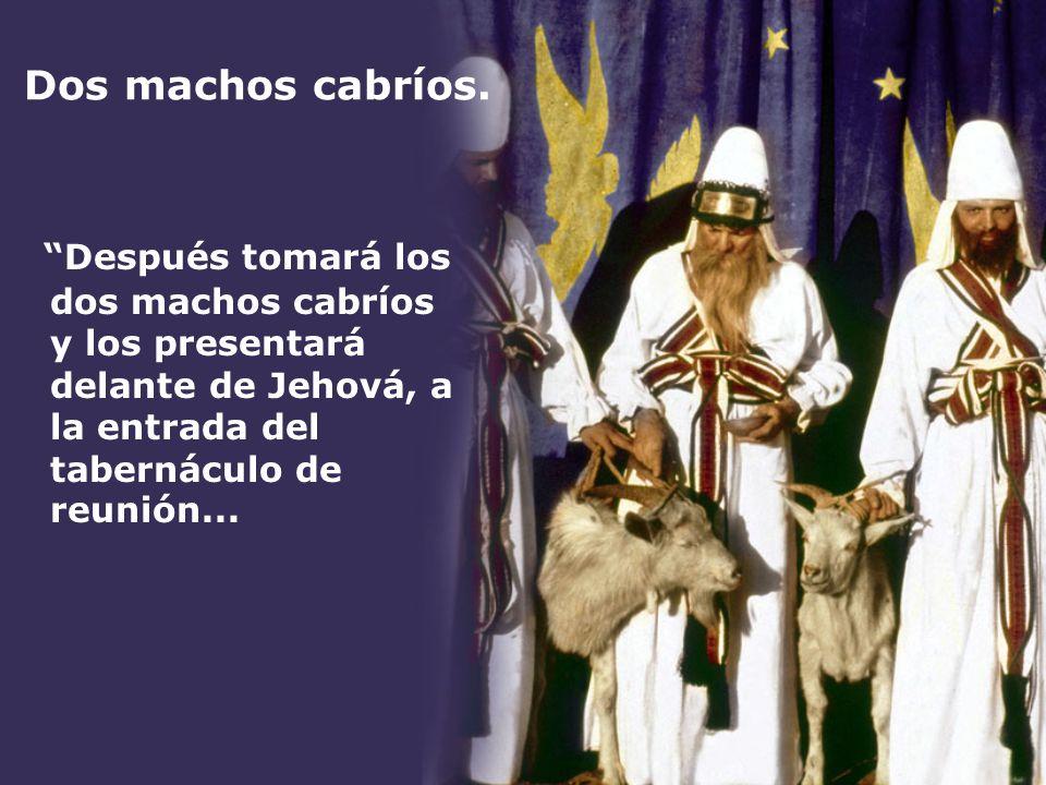 Dos machos cabríos. Después tomará los dos machos cabríos y los presentará delante de Jehová, a la entrada del tabernáculo de reunión...