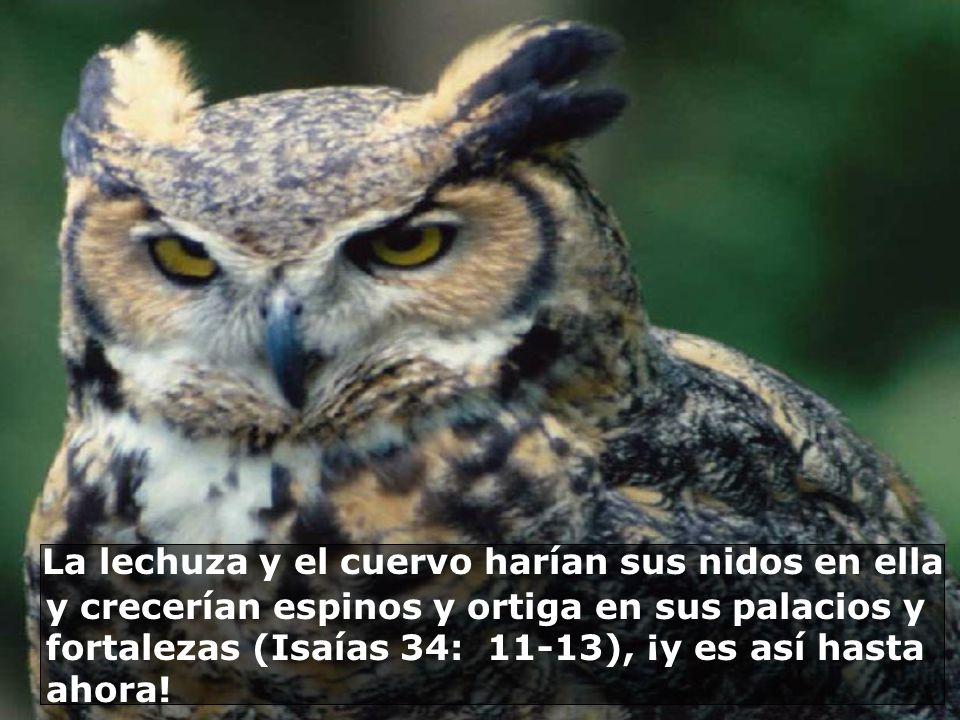La lechuza y el cuervo harían sus nidos en ella y crecerían espinos y ortiga en sus palacios y fortalezas (Isaías 34: 11-13), ¡y es así hasta ahora!