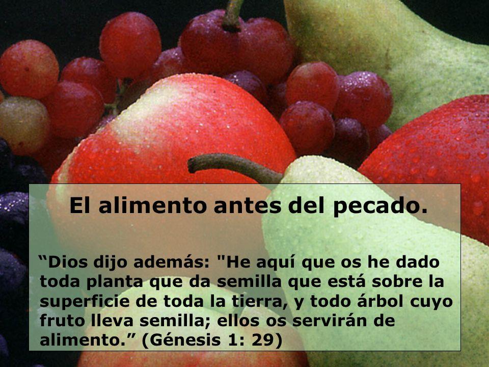 El alimento antes del pecado. Dios dijo además: