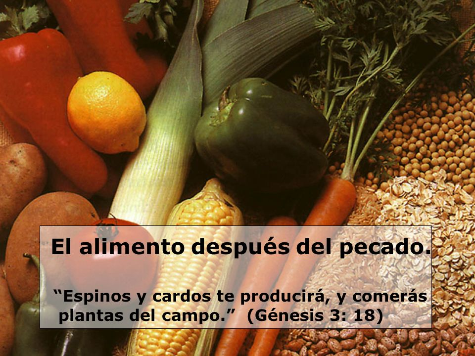 El alimento después del pecado. Espinos y cardos te producirá, y comerás plantas del campo. (Génesis 3: 18)