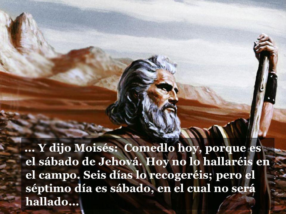 ... Y dijo Moisés: Comedlo hoy, porque es el sábado de Jehová. Hoy no lo hallaréis en el campo. Seis días lo recogeréis; pero el séptimo día es sábado