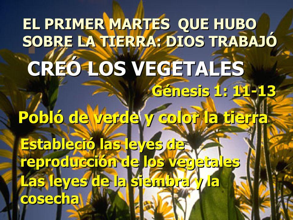 EL PRIMER MARTES QUE HUBO SOBRE LA TIERRA: DIOS TRABAJÓ EL PRIMER MARTES QUE HUBO SOBRE LA TIERRA: DIOS TRABAJÓ Génesis 1: 11-13 Pobló de verde y colo