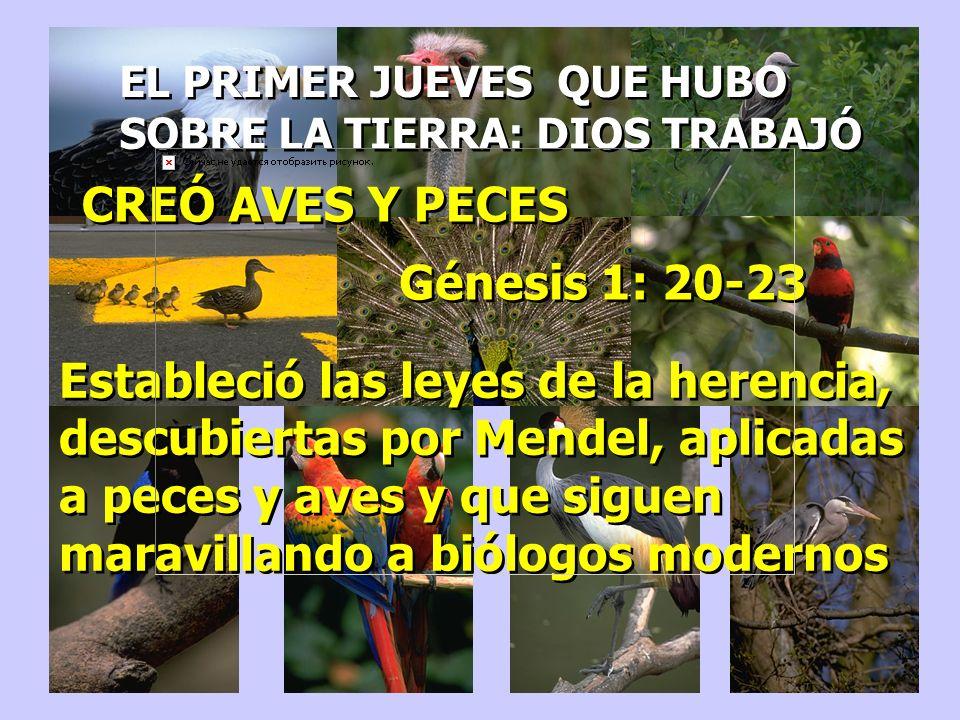 EL PRIMER JUEVES QUE HUBO SOBRE LA TIERRA: DIOS TRABAJÓ EL PRIMER JUEVES QUE HUBO SOBRE LA TIERRA: DIOS TRABAJÓ CREÓ AVES Y PECES Génesis 1: 20-23 Est