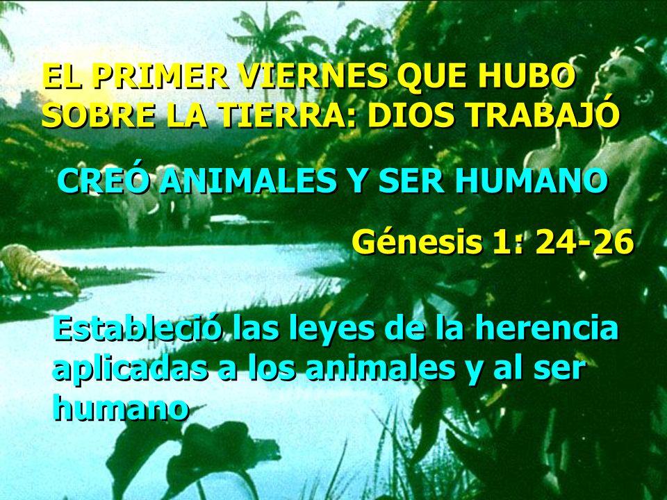 EL PRIMER VIERNES QUE HUBO SOBRE LA TIERRA: DIOS TRABAJÓ EL PRIMER VIERNES QUE HUBO SOBRE LA TIERRA: DIOS TRABAJÓ CREÓ ANIMALES Y SER HUMANO Génesis 1