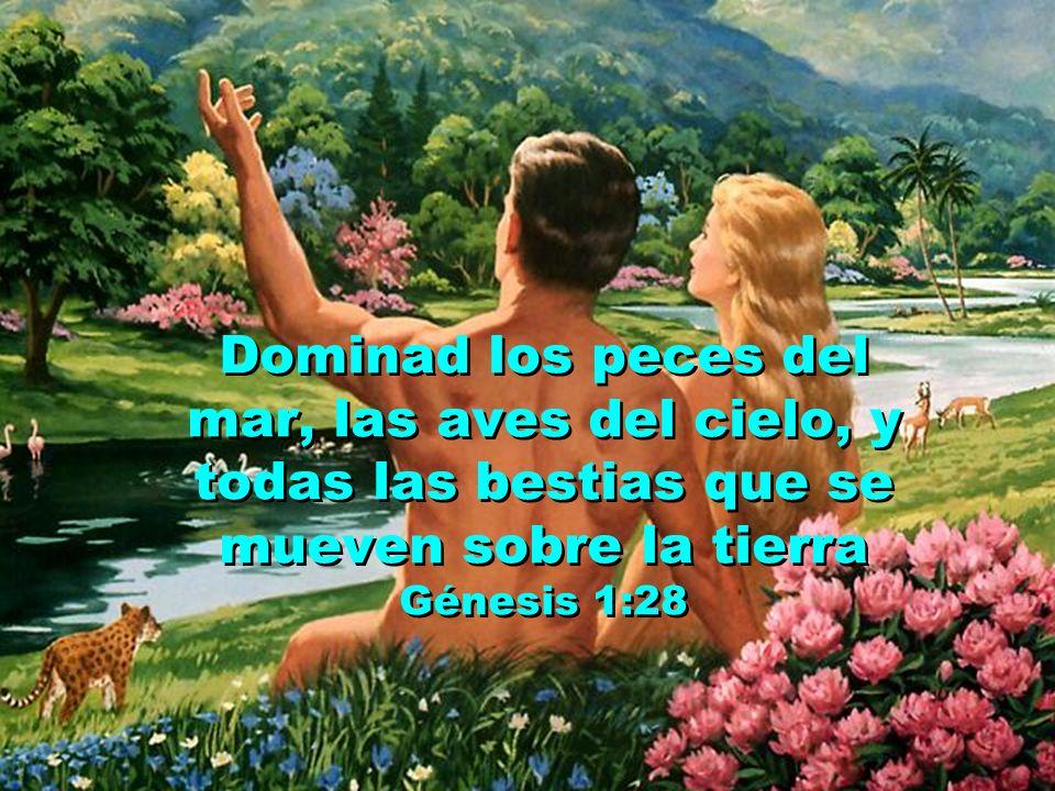 Y los bendijo Dios. Les dijo: Fructificad y multiplicaos. Llenad la tierra y gobernadla. Génesis 1:28
