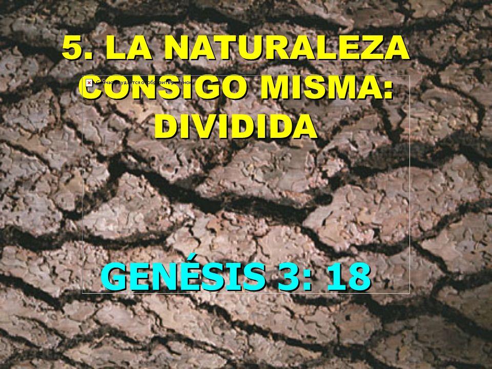 4. EL HOMBRE EN RELACIÓN A LA NATURALEZA: DIVIDIDO GENÉSIS 3: 17 GENÉSIS 3: 17 ANTES EL HOMBRE DOMINABA AHORA EL HOMBRE ES DOMINADO ANTES EL HOMBRE DO