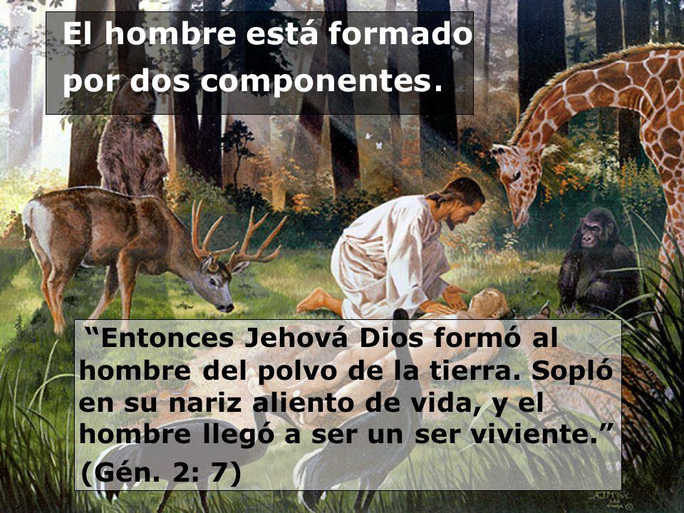 El hombre está formado por dos componentes. Entonces Jehová Dios formó al hombre del polvo de la tierra. Sopló en su nariz aliento de vida, y el hombr