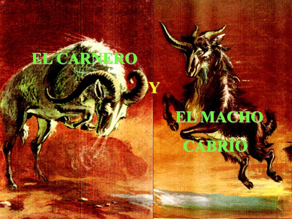 EL CARNERO EL CARNERO Y EL MACHO EL MACHO CABRÍO CABRÍO