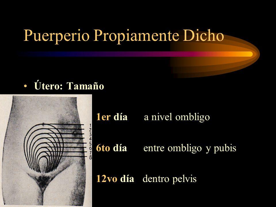 Puerperio Propiamente Dicho D. Cambios Clínicos General: Pulso NL PA NL Peso disminuye ( 4 a 6 K ) Local: Pared abdominal flácida