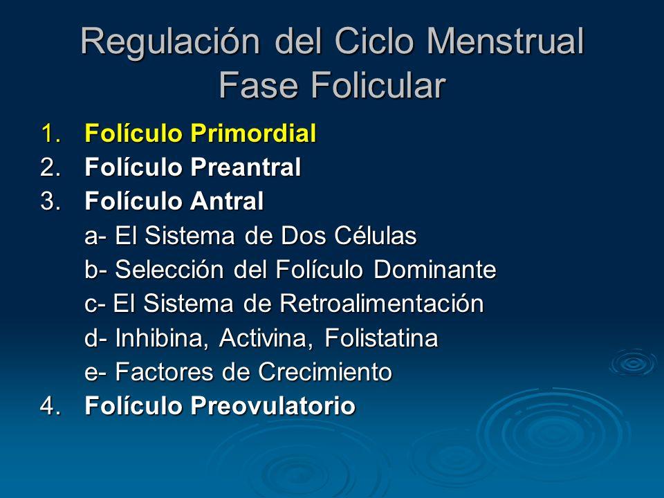Fase Folicular Folículo Primordial Células germinales primordiales: endodermo del saco vitelino, alantoides e intestino posterior Células germinales primordiales: endodermo del saco vitelino, alantoides e intestino posterior 5-6 semanas: migran al reborde genital 5-6 semanas: migran al reborde genital 6-8 semanas: multiplicación mitótica rápida 6-8 semanas: multiplicación mitótica rápida 16-20 semanas: máximo número de oocitos (6-7 millones en ambos ovarios) 16-20 semanas: máximo número de oocitos (6-7 millones en ambos ovarios)