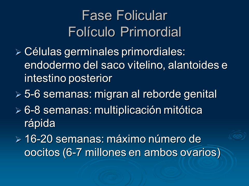 Fase Folicular Folículo Primordial (cont) Un oocito, detenido en Meiosis (Profase), rodeado por una capa única de células granulosas en forma de huso Un oocito, detenido en Meiosis (Profase), rodeado por una capa única de células granulosas en forma de huso 2 millones al nacer 2 millones al nacer 300 000 en pubertad 300 000 en pubertad 400 ovularán 400 ovularán