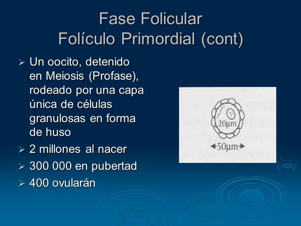 Folículo Antral Inhibina, Activina, Folistatina Péptidos sintetizados por las células de la granulosa en respuesta a la FSH y secretados en el líquido folicular Péptidos sintetizados por las células de la granulosa en respuesta a la FSH y secretados en el líquido folicular Su expresión no está limitada al Ovario Su expresión no está limitada al Ovario Están presentes en muchos tejidos corporales sirviendo como reguladores autocrinos/paracrinos Están presentes en muchos tejidos corporales sirviendo como reguladores autocrinos/paracrinos