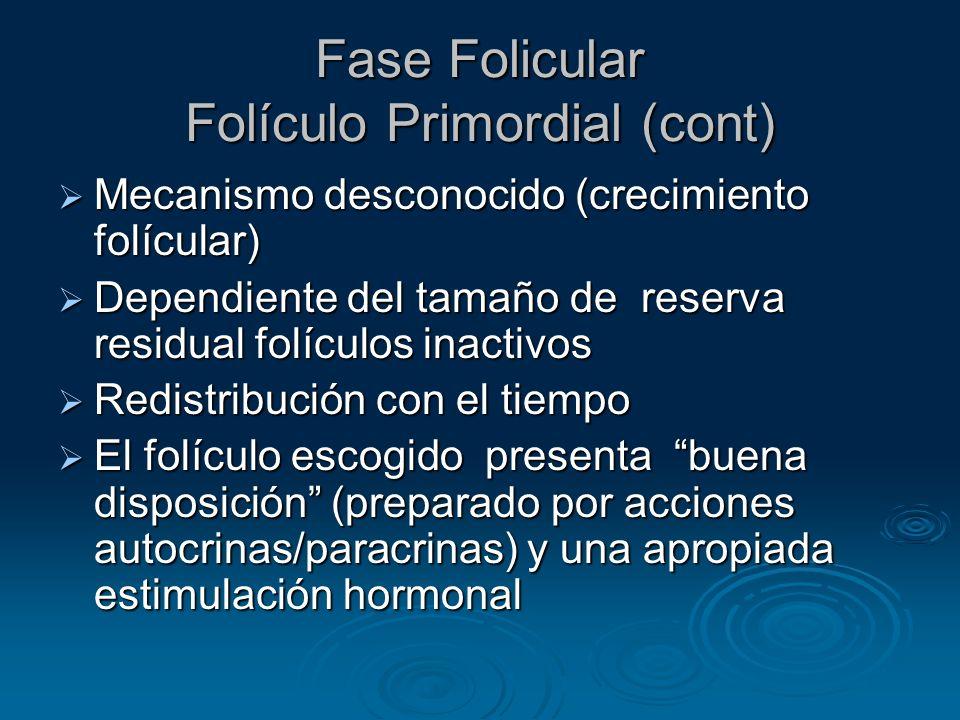 Fase Folicular Folículo Antral Bajo la influencia de estrógenos y FSH hay un aumento de la producción de líquido folicular que se acumula en los espacios intercelulares de la granulosa Bajo la influencia de estrógenos y FSH hay un aumento de la producción de líquido folicular que se acumula en los espacios intercelulares de la granulosa La acumulación de líquido folicular provee un medio donde el oocito y las células granulosas pueden ser nutridos La acumulación de líquido folicular provee un medio donde el oocito y las células granulosas pueden ser nutridos Las células granulosas que rodean al oocito son ahora designadas el cumulus oophorus Las células granulosas que rodean al oocito son ahora designadas el cumulus oophorus