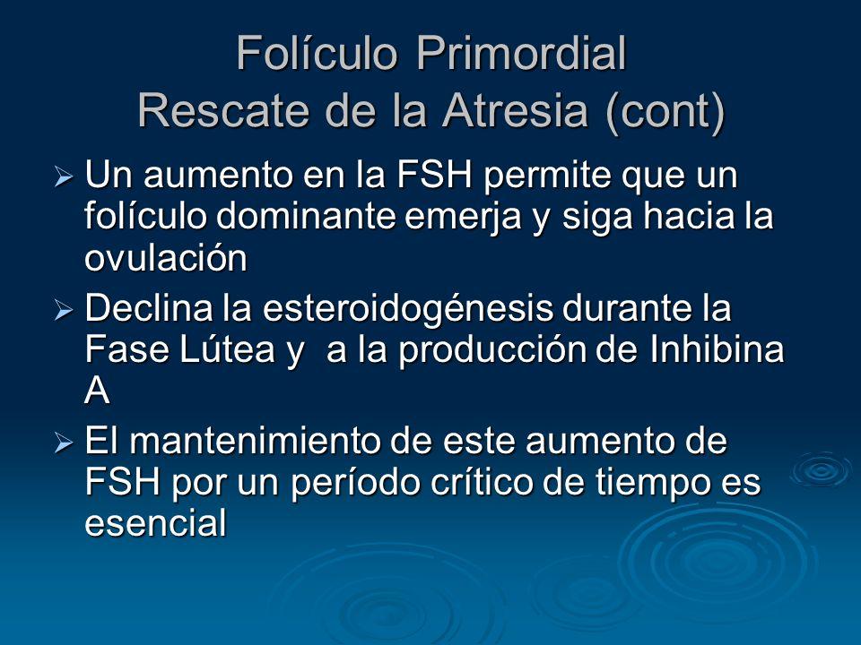 Fase Folicular Folículo Preovulatorio (cont) El Folículo produce cantidades crecientes de estrógenos El Folículo produce cantidades crecientes de estrógenos Durante la Fase Folicular tardía, los estrógenos aumentan primero despacio, luego rápido, alcanzando un pico 24-36 horas antes Ovulación Durante la Fase Folicular tardía, los estrógenos aumentan primero despacio, luego rápido, alcanzando un pico 24-36 horas antes Ovulación El inicio de la oleada de LH ocurre cuando los niveles de estradiol alcanzan su pico El inicio de la oleada de LH ocurre cuando los niveles de estradiol alcanzan su pico