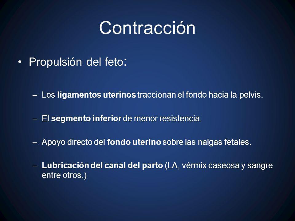 Contracción Propulsión del feto : –Los ligamentos uterinos traccionan el fondo hacia la pelvis. –El segmento inferior de menor resistencia. –Apoyo dir