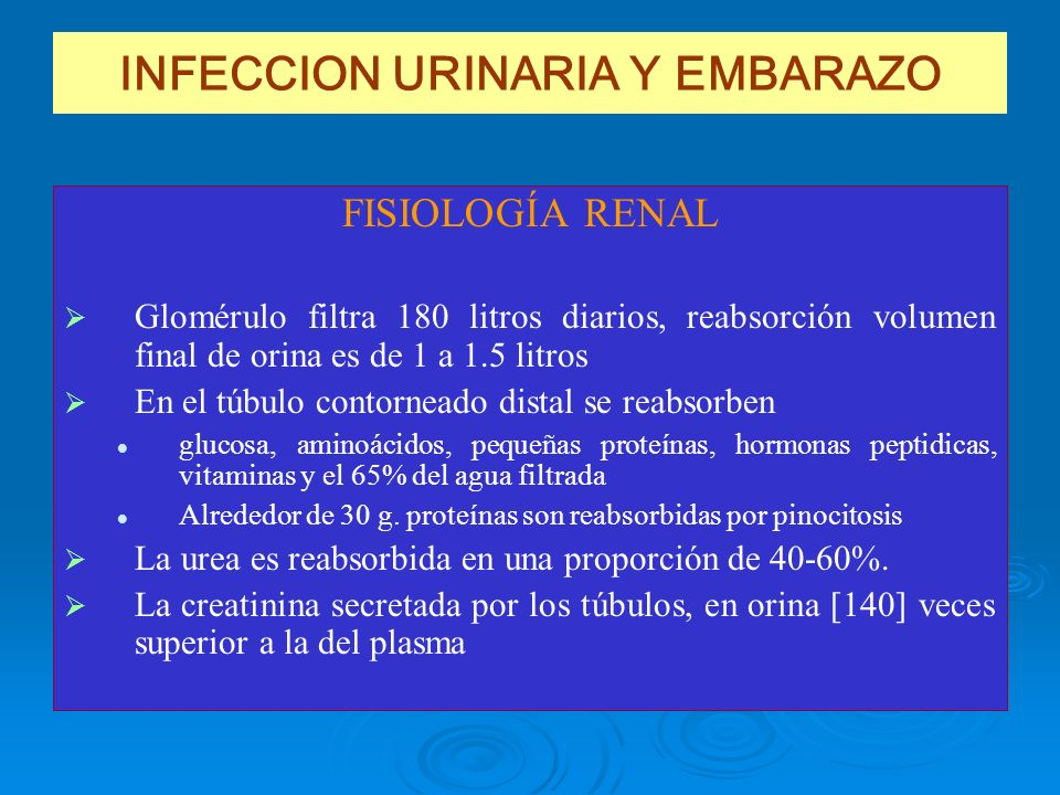 INFECCION URINARIA Y EMBARAZO FISIOLOGÍA RENAL Glomérulo filtra 180 litros diarios, reabsorción volumen final de orina es de 1 a 1.5 litros En el túbu